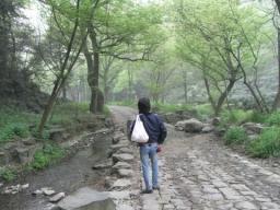 09碧螺春・龍井0232