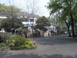 09碧螺春・龍井0366