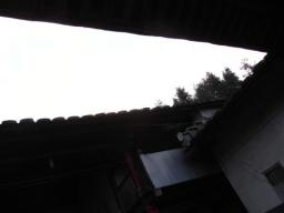 09春鉄観音0777