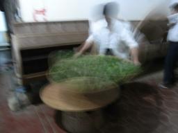 09春鉄観音0955