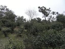 RIMG0163