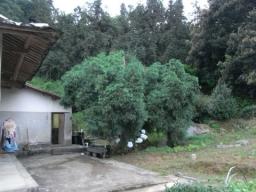 RIMG2132