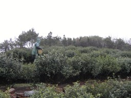 RIMG0428