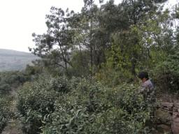RIMG2063