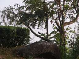 RIMG1108