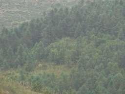 RIMG3202