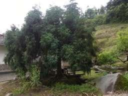 RIMG2106