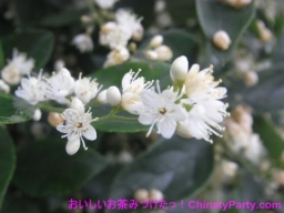 RIMG0184